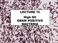 High GC        GRAM POSITIVE BACTERIA PowerPoint PPT Presentation