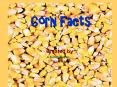 Corn Facts PowerPoint PPT Presentation