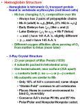 Hemoglobin Structure PowerPoint PPT Presentation
