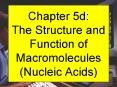 Chapter 5d: The Structure and Function of Macromolecules (Nucleic Acids) PowerPoint PPT Presentation