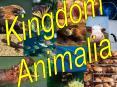Kingdom PowerPoint PPT Presentation