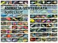 ANIMALIA-VERTEBRATA   IKAN LAUT PowerPoint PPT Presentation