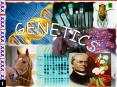 GENETICS PowerPoint PPT Presentation
