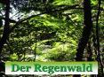 Der Regenwald PowerPoint PPT Presentation