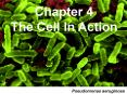Chapter 4 The Cell In Action PowerPoint PPT Presentation