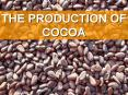 THE PRODUCTION OF COCOA PowerPoint PPT Presentation