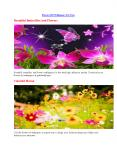 Download Flowers HD Wallpapers With Standard Resolution PowerPoint PPT Presentation