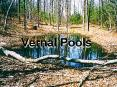 Vernal Pools PowerPoint PPT Presentation