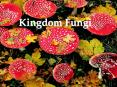Kingdom Fungi PowerPoint PPT Presentation