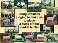 Using livestock judging techniques to place a class of four market lambs PowerPoint PPT Presentation
