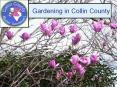 Gardening in Collin County PowerPoint PPT Presentation