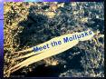 Meet the Mollusks PowerPoint PPT Presentation