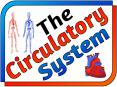 The Circulatory System PowerPoint PPT Presentation