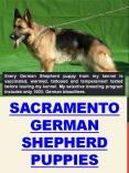 Sacramento German Shepherd Puppies PowerPoint PPT Presentation