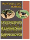 Marysville German Shepherd Breeder PowerPoint PPT Presentation