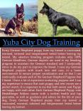 Sacramento Dog Training PowerPoint PPT Presentation