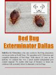 bed bug exterminator dallas PowerPoint PPT Presentation