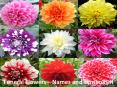 Funeral Flowers—Names and Symbolism PowerPoint PPT Presentation