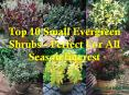 Top 10 Small Evergreen Shrubs -  Perfect For All Season Interest PowerPoint PPT Presentation
