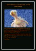 9 Birds Who Look More Like Aliens Than Birds PowerPoint PPT Presentation