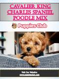 Cavalier King Charles Spanie l Poodle Mix | puppiesclub.com PowerPoint PPT Presentation