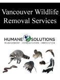 Vancouver Wildlife Removal Services PowerPoint PPT Presentation