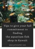 Tips to give your full commitment to find fish aquarium accessories online – Petsmarket PowerPoint PPT Presentation