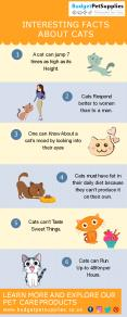 Interesting facts about Cats PowerPoint PPT Presentation