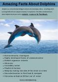 Amazing Facts About Dolphins PowerPoint PPT Presentation