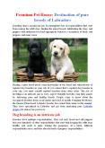 Premium Pet House: Destination of pure breeds of Labradors PowerPoint PPT Presentation
