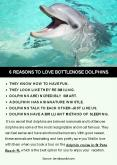 6 Reasons To Love Bottlenose Dolphins PowerPoint PPT Presentation