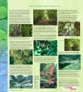 CLIMATE AND DECIDUOUS FORESTS IN MARITIME CANADA PowerPoint PPT Presentation