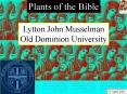 Plants of the Bible PowerPoint PPT Presentation