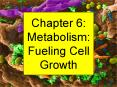 Chapter 6: Metabolism: Fueling Cell Growth PowerPoint PPT Presentation