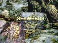 SEAWEED ECOLOGY PART I PowerPoint PPT Presentation