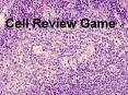Cell Review Game PowerPoint PPT Presentation