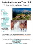 Bovine Papillomavirus Type 1 PowerPoint PPT Presentation