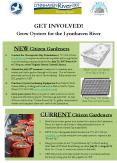 GET INVOLVED Grow Oysters for the Lynnhaven River PowerPoint PPT Presentation
