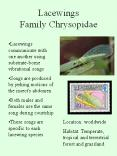 Lacewings Family Chrysopidae PowerPoint PPT Presentation