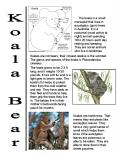 Koala Bear PowerPoint PPT Presentation