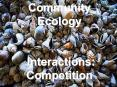 Community Ecology Interactions: Competition PowerPoint PPT Presentation