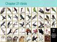 Chapter 21Birds PowerPoint PPT Presentation