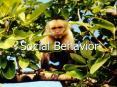 Social Behavior PowerPoint PPT Presentation