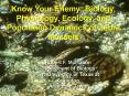 Know Your Enemy: Biology, Physiology, Ecology, and Population Dynamics of Zebra Mussels PowerPoint PPT Presentation