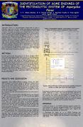 IDENTIFICATION OF SOME ENZYMES OF THE PECTINOLYTIC SYSTEM OF Aspergillus flavus C' E' GmezSnchez, M' PowerPoint PPT Presentation