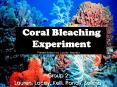 Coral Bleaching Experiment PowerPoint PPT Presentation