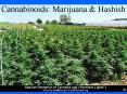 Cannabinoids: Marijuana PowerPoint PPT Presentation