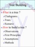 Tree Building PowerPoint PPT Presentation