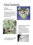 Foliar Nematodes PowerPoint PPT Presentation