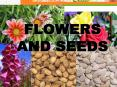 Flowers and Seeds PowerPoint PPT Presentation